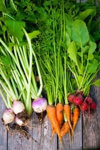 vegtable garden